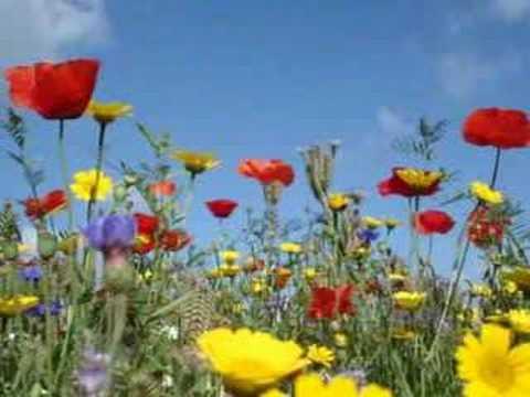 Johnny Mathis – Wonderful Wonderful – Lyrics Below