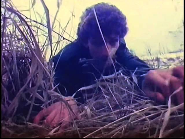 Lady Pank – Fabryka małp (1984)